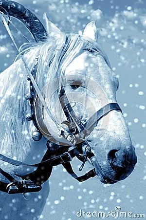 Caballo en nieve