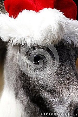Caballo miniatura del semental con el sombrero de la Navidad
