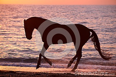 Caballo que corre a través del agua