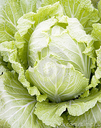 Free Cabbage Stock Images - 12896324