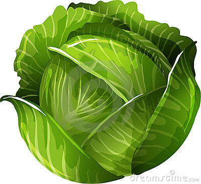 Free Cabbage Royalty Free Stock Photo - 21894205