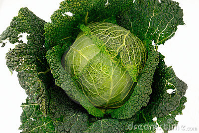 Cabbage-3