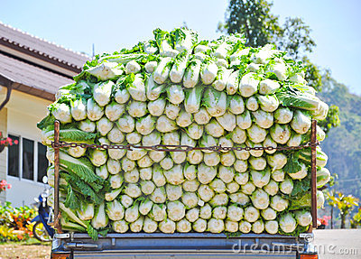Cabbage on the truck