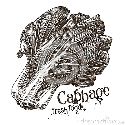 Free Cabbage Vector Logo Design Template. Fresh Royalty Free Stock Images - 52742759