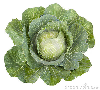 Free Cabbage Vegetable Royalty Free Stock Image - 20071186