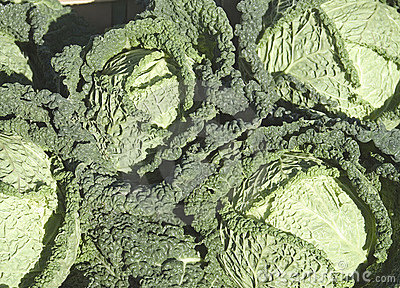 Cabbages (savoy type)