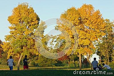 Cabritos que juegan en el parque