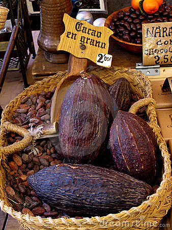 Cacao seed