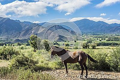 Cachi Adentro in Salta, northern Argentina