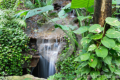 Cachoeira calma da floresta úmida
