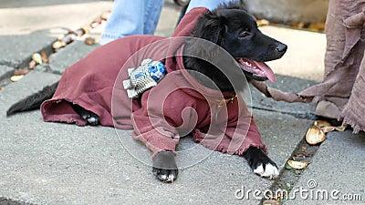 Cachorrinho preto bonito em um traje de Jedi filme