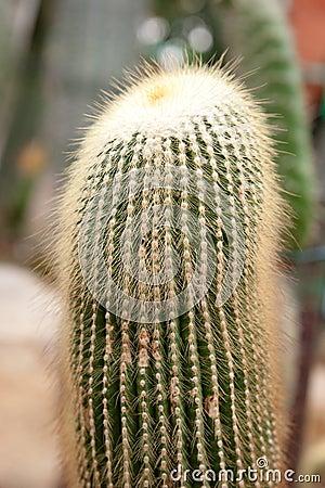 Cacti plants