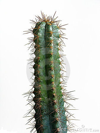Free Cactus Stock Images - 1068894