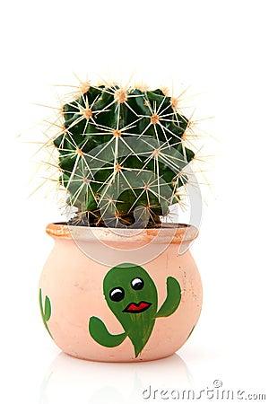 Free Cactus Stock Images - 11205354
