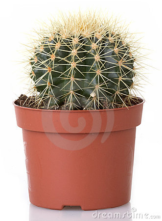 Free Cactus Stock Photos - 18088983