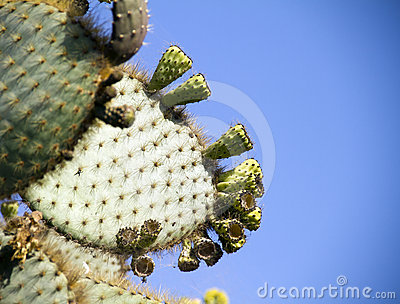 Cactus Royalty Free Stock Photo - Image: 24216195