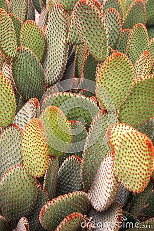 Free Cactus Stock Photos - 3398543