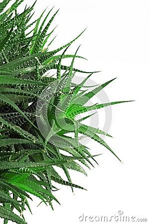Free Cactus Royalty Free Stock Photo - 5631845