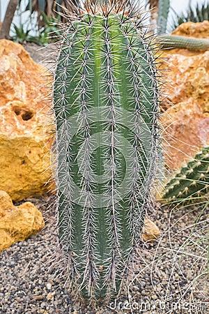 Cactus botánico