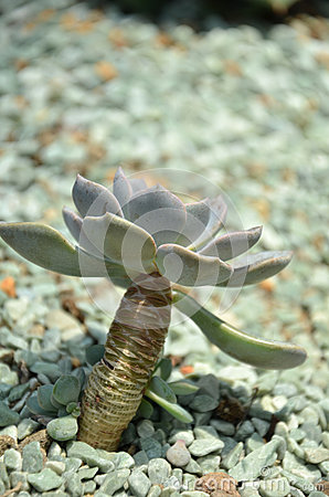 Cactus In Botanic Garden Stock Photo Image 61592074