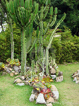 Cactus in botanical garden
