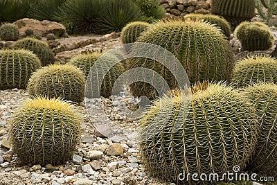 Cactus, botanical garden
