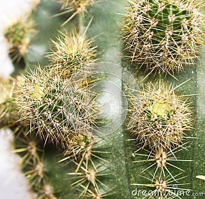 Cactus close-up 2