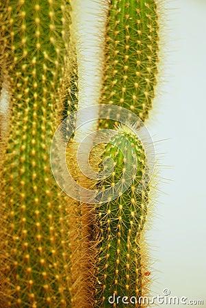Free Cactus Closeup 01 Royalty Free Stock Images - 2089119