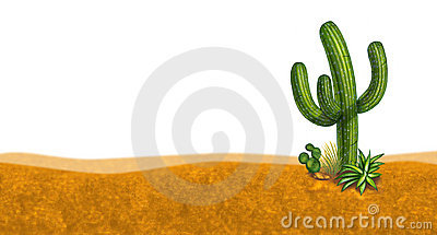 Cactus desert scene