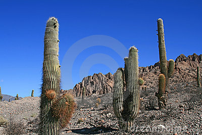 Cactus in Deserts