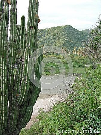 Cactus di Maruata