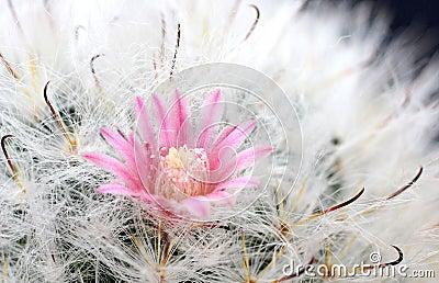 Cactus Flower , Cactus, Nature, Plant,