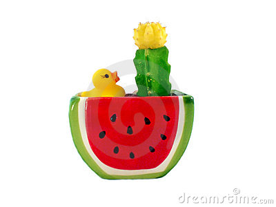 Cactus flowerpot of watermelon shape with a yellow