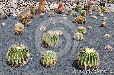 Cactus garden,Jardin de Cactus,Lanzarote,Spain
