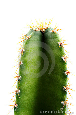 Free Cactus Green And Fresh Royalty Free Stock Photo - 16272195