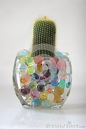 Cactus in hygrogel crystals