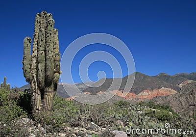 Cactus landscape in Argentina