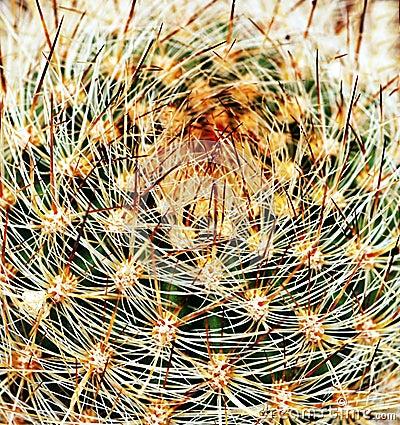 Cactus macro closeup