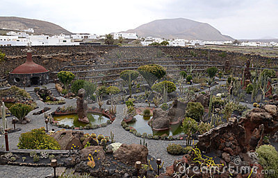 Cactus park