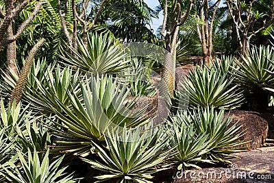 Cactus pavilion in Nong Nooch Tropical Botanical Garden, Pattaya