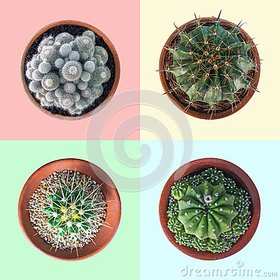 Free Cactus Plant In Clay Pot Top View Collection On Pastel Colorful Stock Image - 99026751