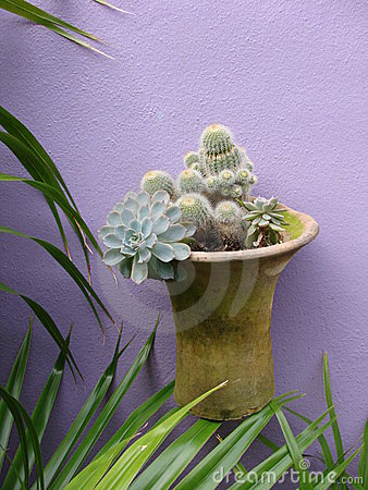 Cactus in pot hanging on purple wall