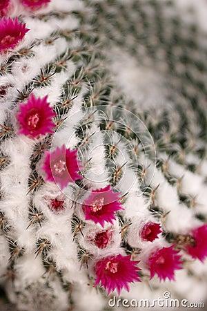 Cactus s flower