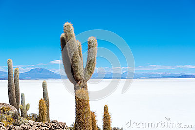 Cactus and Salt