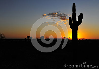 Cactus silhouette colorful sunset, arizona, united states, copys