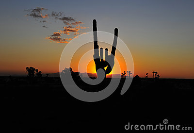 Cactus silhouette colorful sunset, arizona, united states