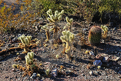 Cactus Species