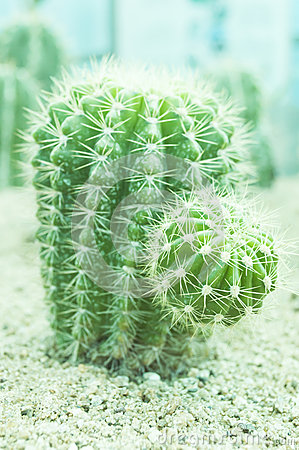 Free Cactus Spiky Succulent Green Plants Stock Photography - 34867662
