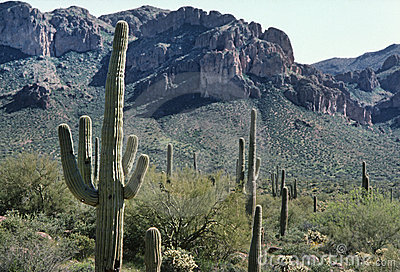 Cactus and the Superstition Mountains