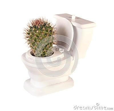 Free Cactus Toilet Royalty Free Stock Photography - 23639047